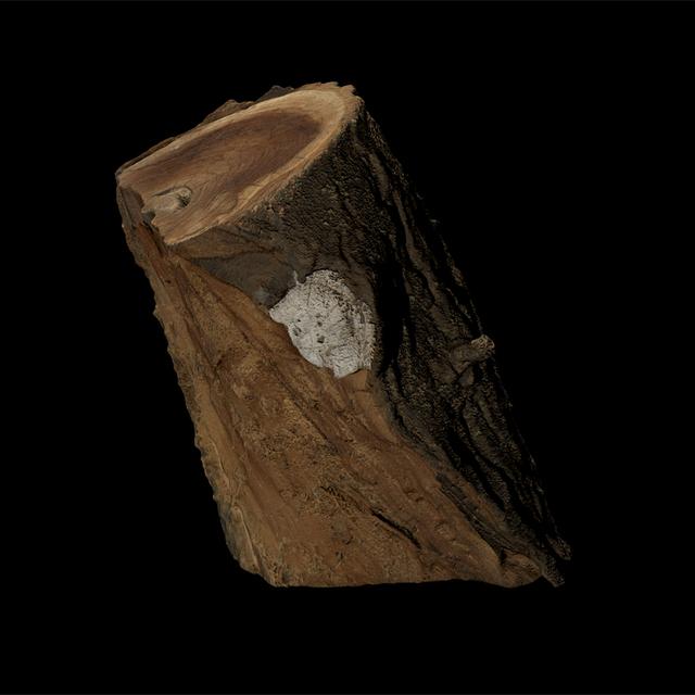 3D scan tree wood