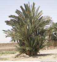 Plant Fields 0141