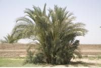 Plant Fields 0142