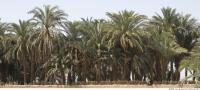 Plant Fields 0029