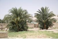 Plant Fields 0151