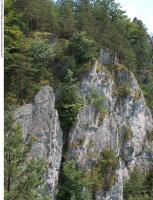rock grassy