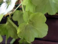 Photo Texture of Leaf