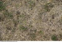 Photo Texture of Grass Dead