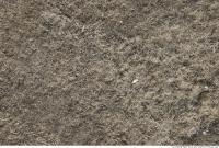 Photo Texture of Grass Dead