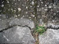concrete damaged