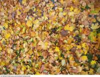 Photo Textures of Leaves Dead