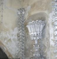 Photo Reference of Bones