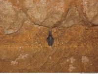 photo texture of background cave