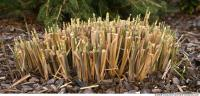 Photo Texture of Grass Tall