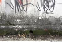 Walls Concrete 0040