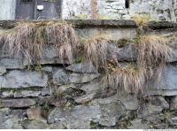Walls Stone 0022