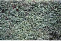 Plant Fields 0025