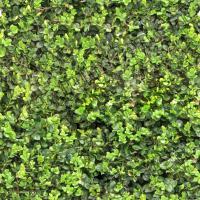 Seamless hedge 0001
