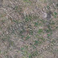 seamless grass dead