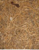 Ground Thatch 0001