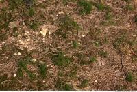 Photo Texture of Grass