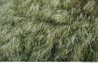 Photo Texture of Grass