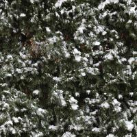 High Resolution Seamless Frozen Ground Texture 0001