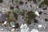 Photo Texture of Mossy 0005