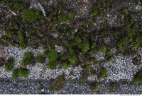 Photo Texture of Mossy 0002