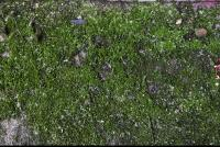 free photo texture of mossy