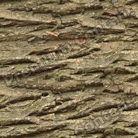Photo High Resolution Seamless Tree Bark Texture 0001
