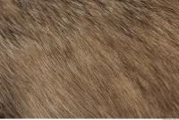 photo texture of fur 0003
