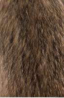 photo texture of fur 0007