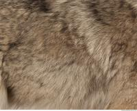 photo texture of fur 0014