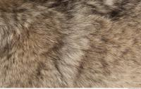 photo texture of fur 0020