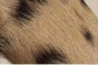 photo texture of fur 0024
