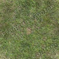 photo texture of grass seamless 0003