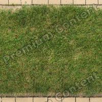 photo texture of grass seamless 0005
