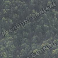 photo texture of forest seamless 0001