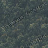 photo texture of forest seamless 0003