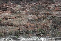 photo texture of wall brick overgrown 0003