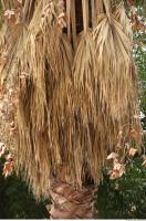 palm leaves dead