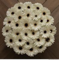 gerbera flowers 0002