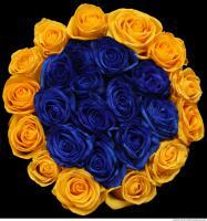roses flowers 0004
