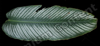 decal leaf