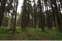 background forest 0005