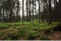background forest 0031