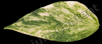 decal leaf 0010