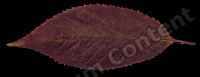 decal leaf 0013