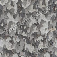 seamless tree bark 0001