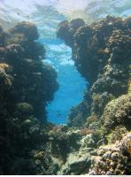 Red Sea Coral 5