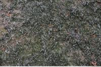 frozen grass 0002