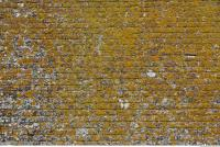 wall bricks overgrown moss 0005