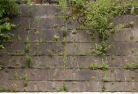 wall concrete overgrown